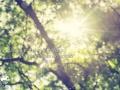 El-sol-saldra-Vinos-de-La-Mancha