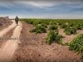 Frase-de-paciencia-Vinos-de-La-Mancha