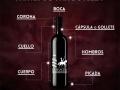 Partes de una Botella - Vinos de La Mancha
