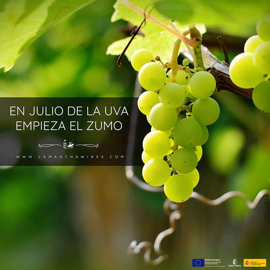 En-julio-de-la-uva-empieza-el-zumo