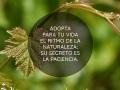 Madre-Tierra-Vino-de-La-Mancha