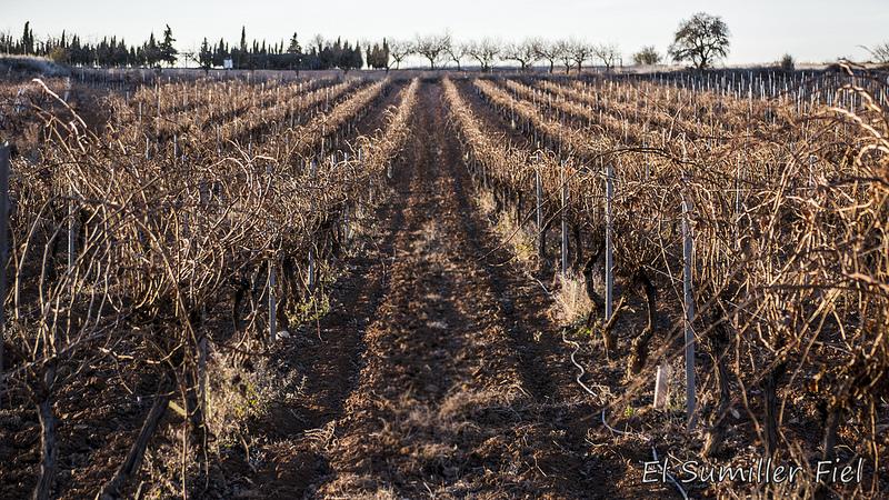 Fotografía de viñedo durante la poda