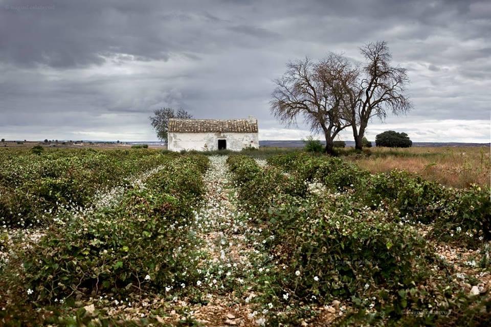 Fotografía de Miguel Calatayud
