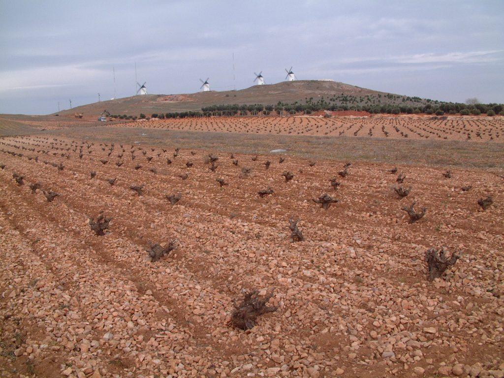 Molinos Alcázar con viñedo DO La Mancha