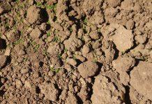 El suelo manchego refleja la buena evolución del viñedo
