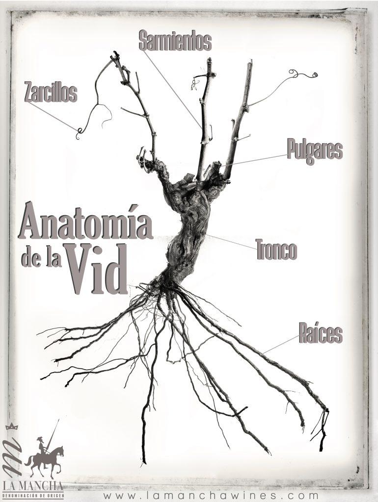 anatomia-vid