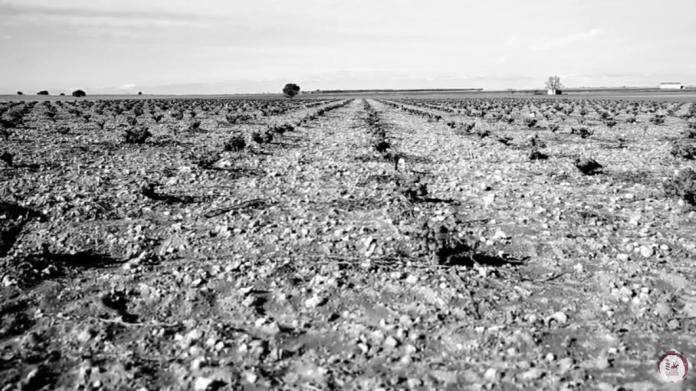 365 días y un destino, vinos de La Mancha
