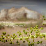 belleza-oculta-eng
