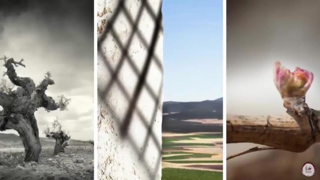 Mancha tu vida, descubre La Mancha y sus viñedos