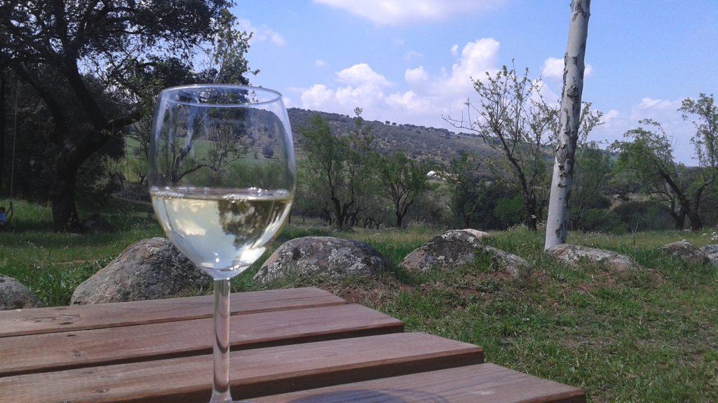 copa de vino en el campo