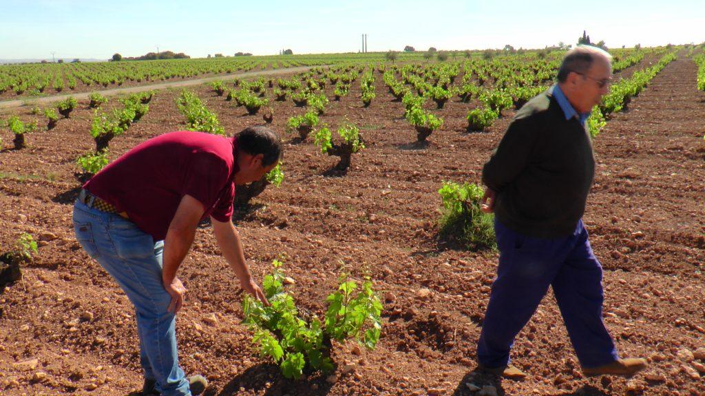 agricultores en La Mancha pendientes de la floración