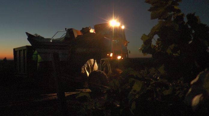 vendimia nocturna en La Mancha