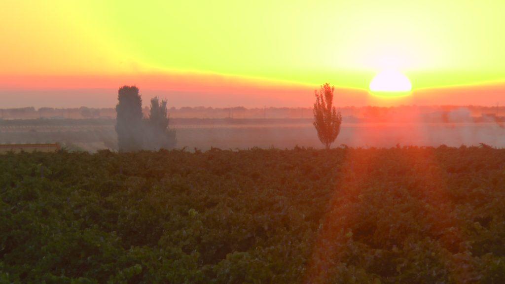 Los primeros rayos de sol como testigos de la vendimia en las primeras variedades