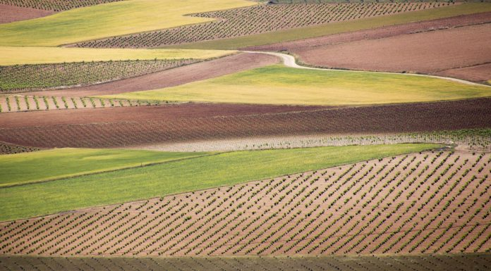 Enoturismo para La Mancha