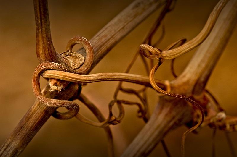 El Origen del vino - La Mancha el entorno
