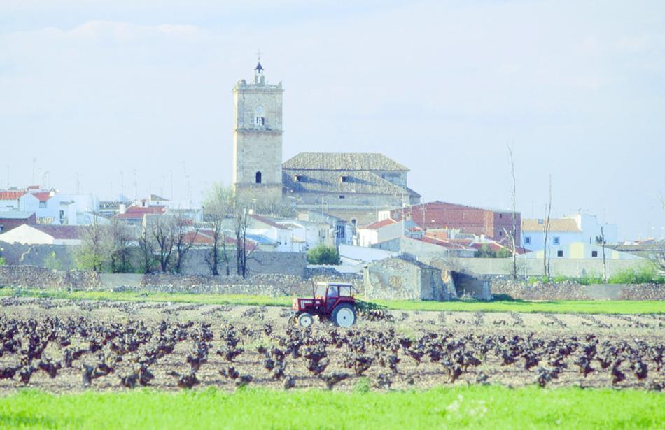 Enoturismo en Toledo - El Toboso