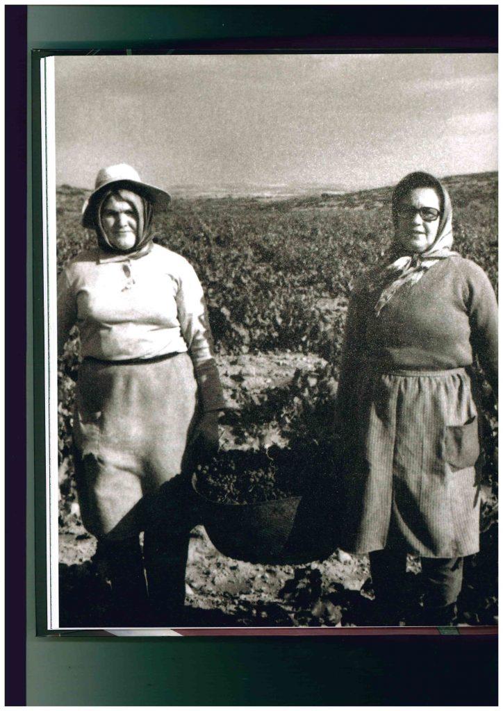 Imagen extraída del libro Espacios y paisajes del vino