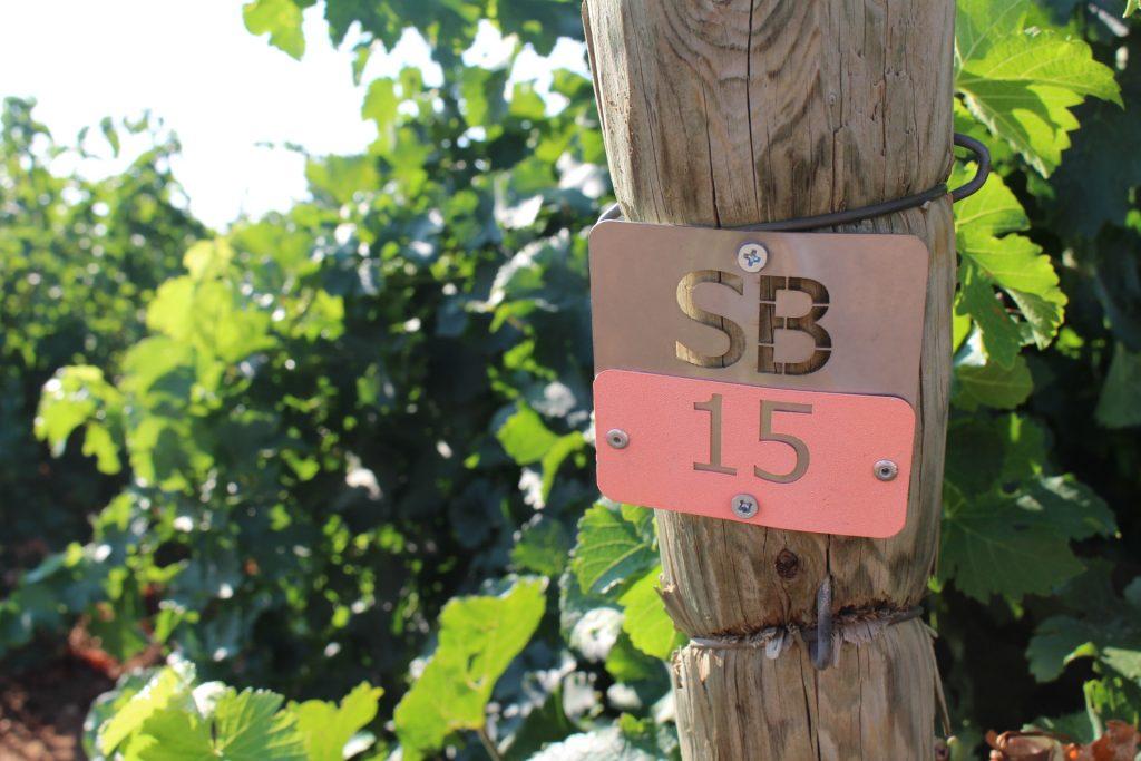 Parcela de Sauvignon Blac en DO La Mancha