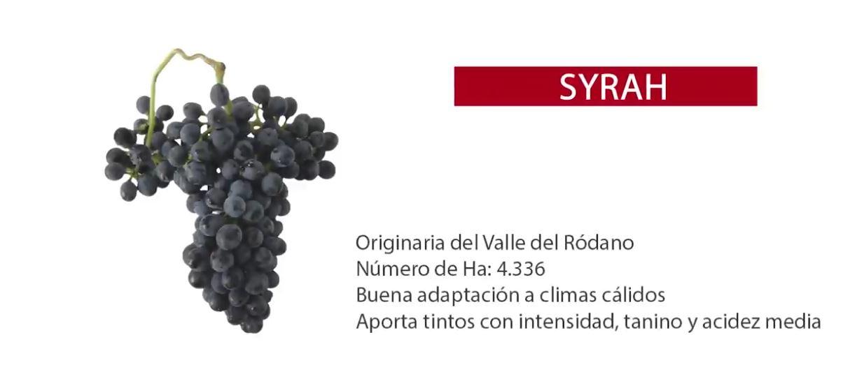 Características de la uva tinta Syrah