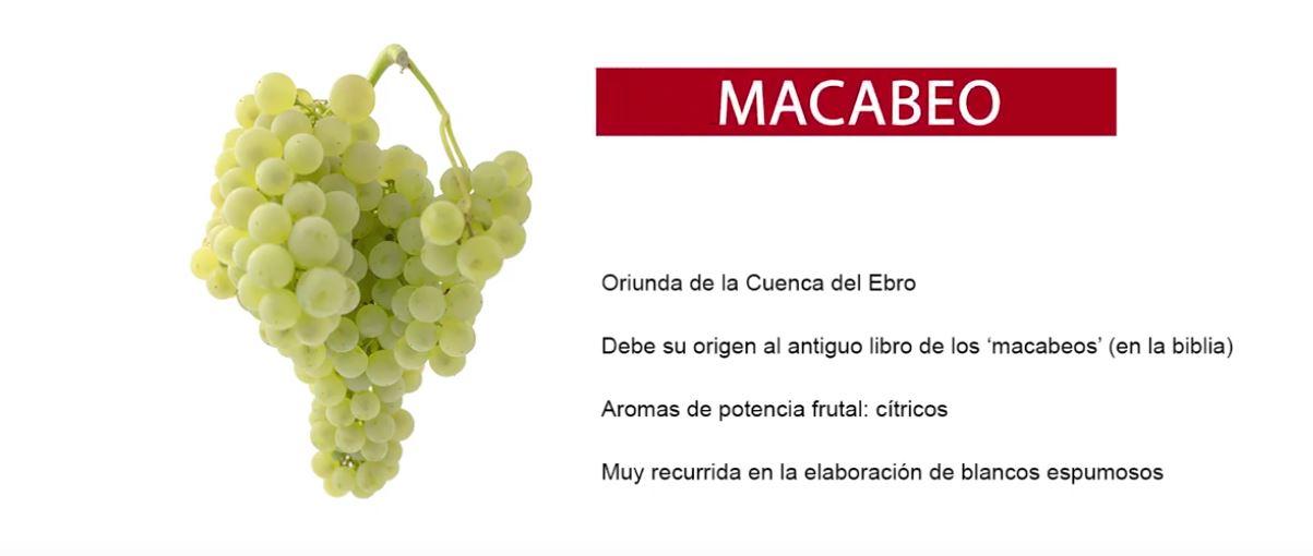 Características uva Macabeo o Viura