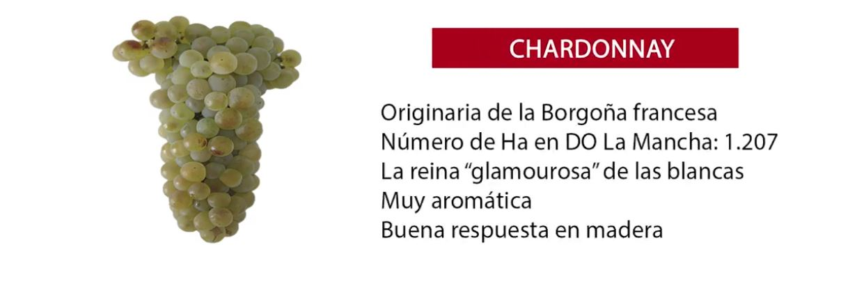 características uva Chardonnay