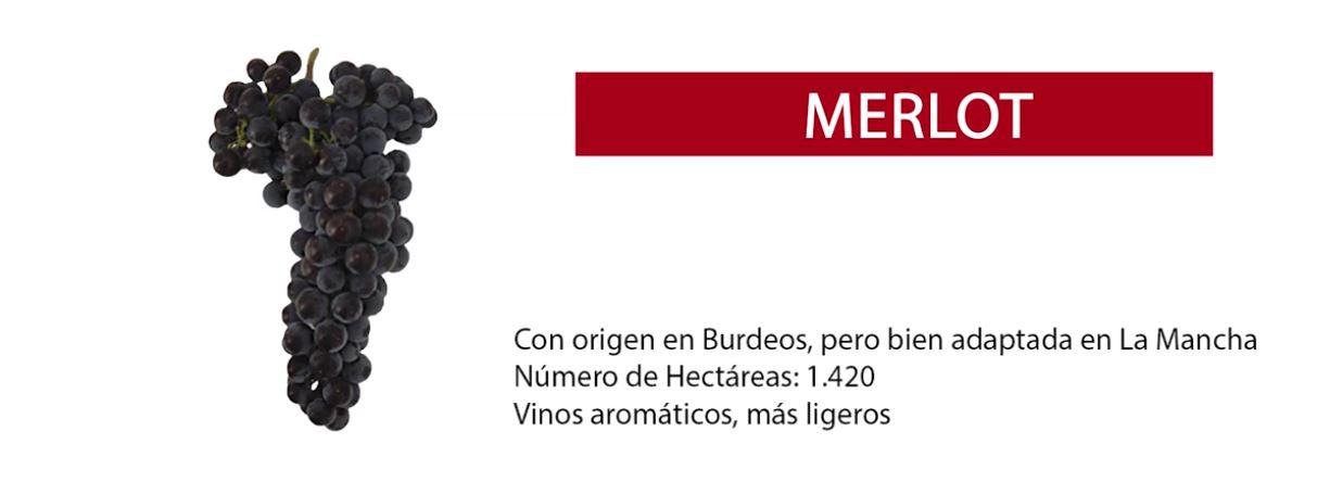 características uva Merlot