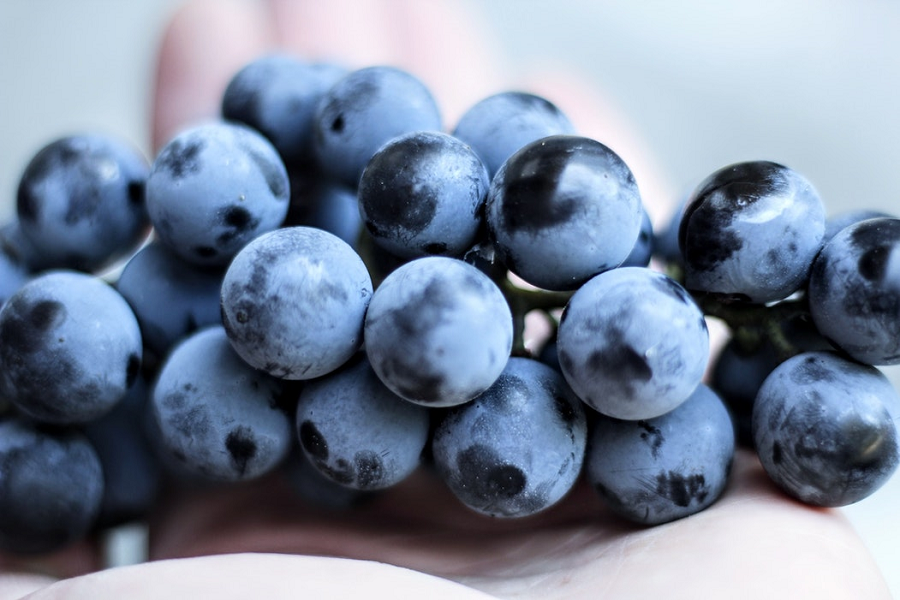 uvas tempranillo y el bronceado