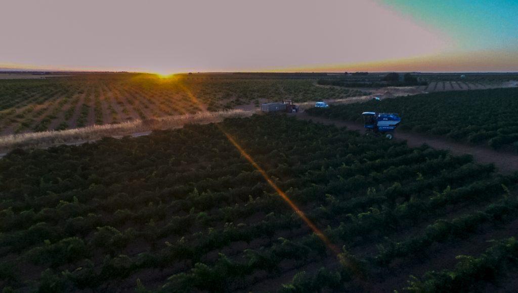 Drone vendimia chardonnay