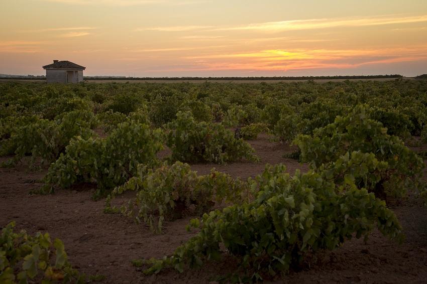 Viñedo ecológico en La Mancha