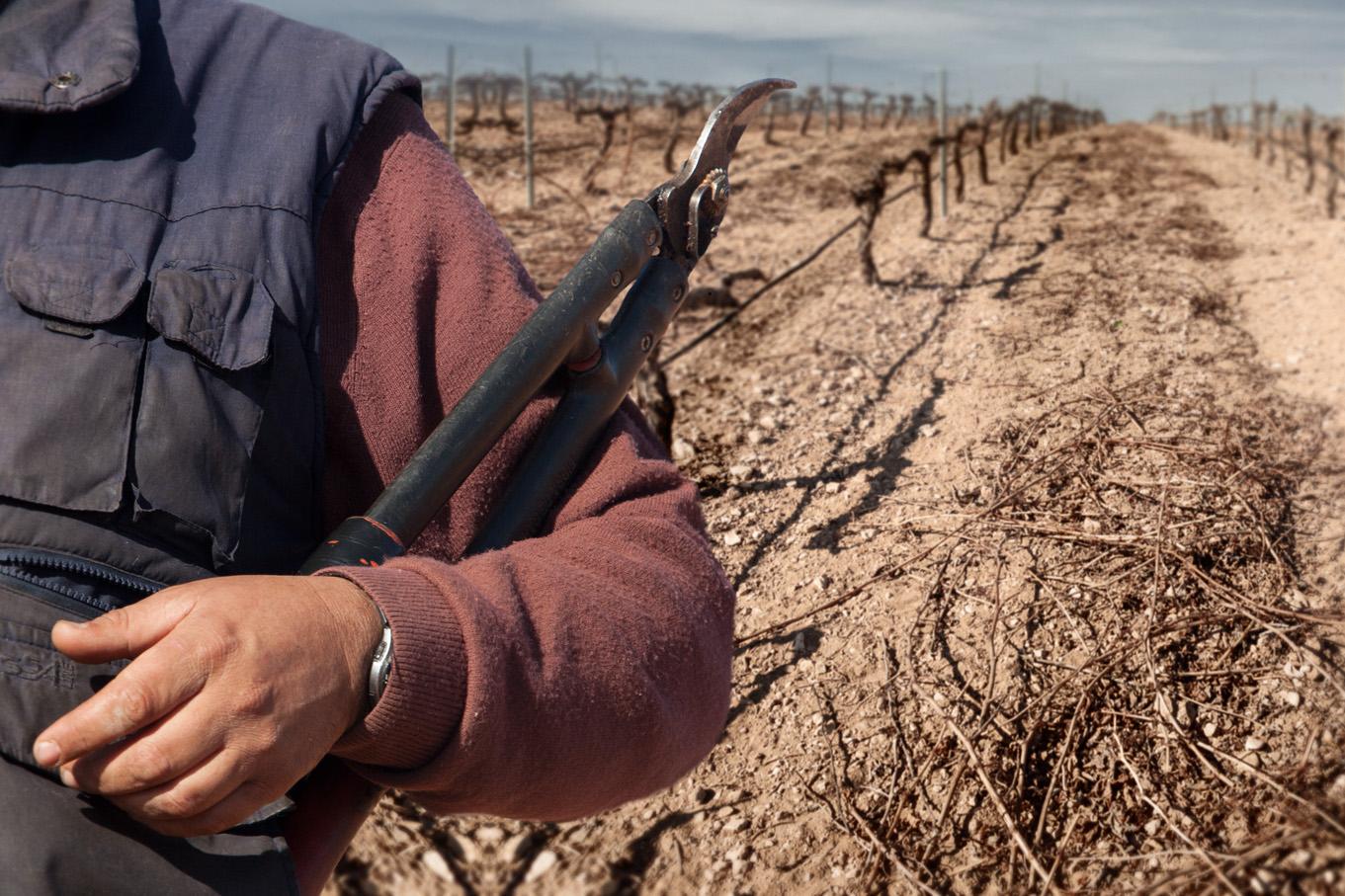 剪定作業はブドウ園では年間を通じて労働が求められる