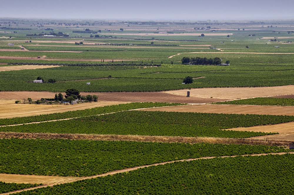 Overhead view of a La Mancha vineyard