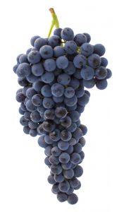 Racimo uva merlot