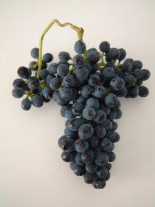 Racimo uva syrah