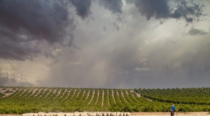 Imagen de Luna de la Ossa para los vinos DO La Mancha