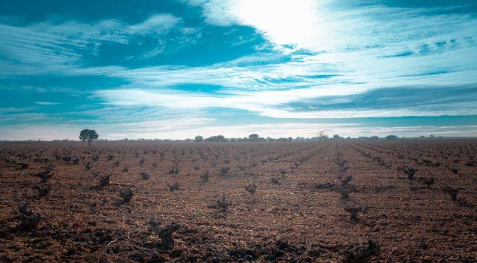 Viñedo en La Mancha en invierno