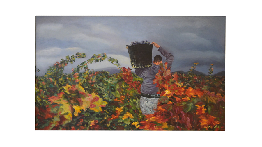 Etapa de la vendimia. Hombre vendimiando llevando sobre su hombro un capacho lleno de uvas.