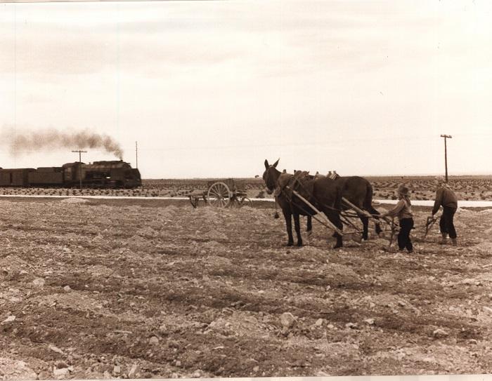 Vendimiadores preparan la tierra arandola con su carro de tiro.