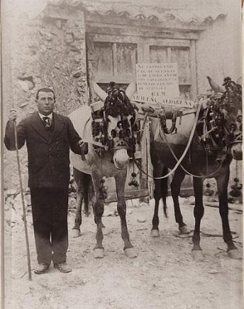 Señor sujeta un par de mulas que intenta vender.